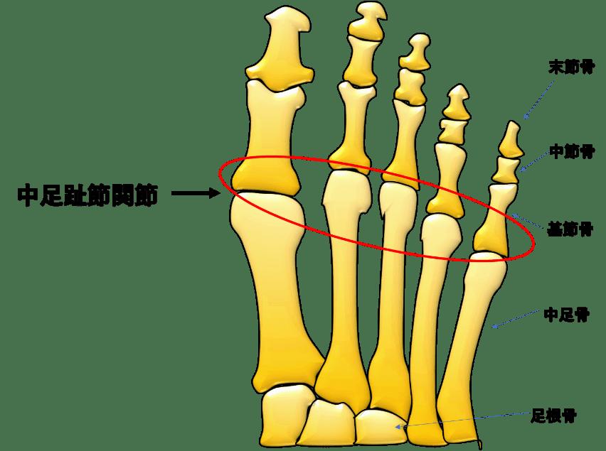 足 の 指 人差し指 長い