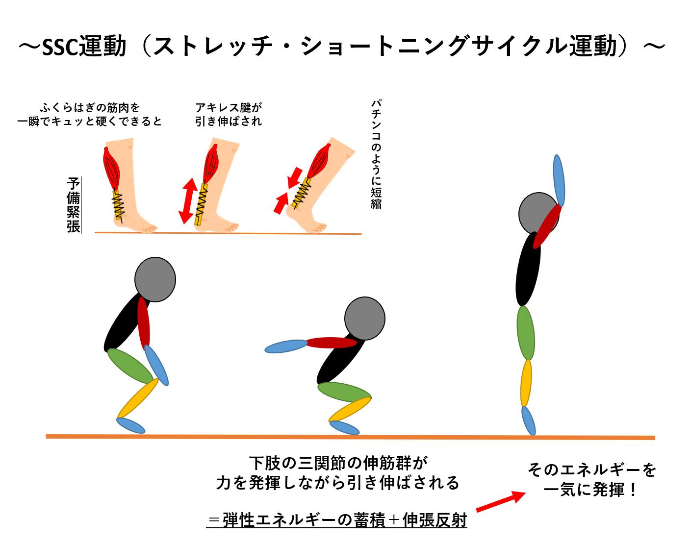 脚のバネを鍛える Ssc運動 ストレッチ ショート二ング サイクル